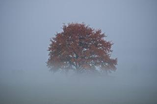 Morning fog in Dresden